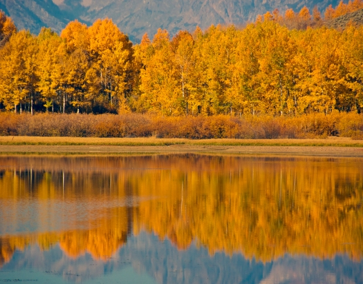 Aspens reflection